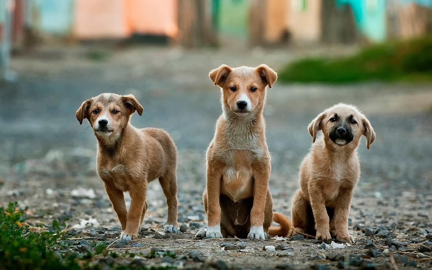 """Kristjan Otsmann: """"Kui töö ikka väga meeldib, siis käitume nagu koerad."""""""