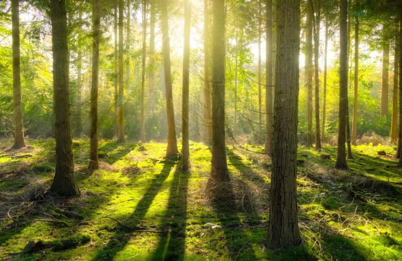 Райский лес.